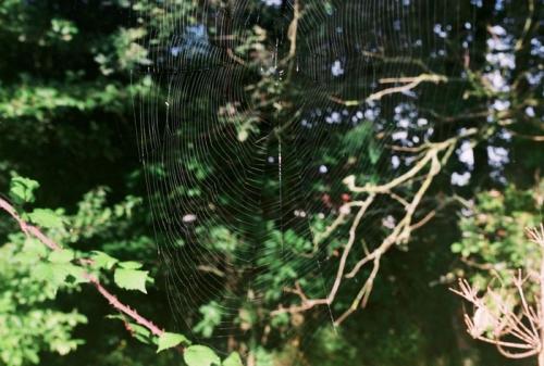 Roll1.toile d'araignée35.jpg