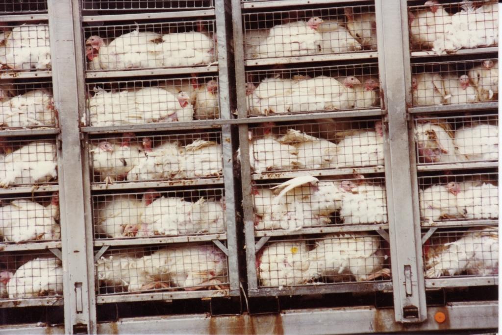 Faisons cesser les levages camps de concentration c 39 est for Abreuvoir lapin fait maison