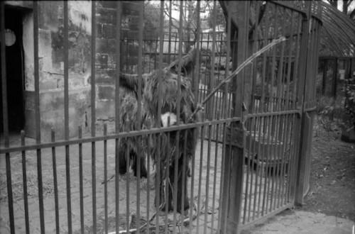 l'âne du Poitou.jpg