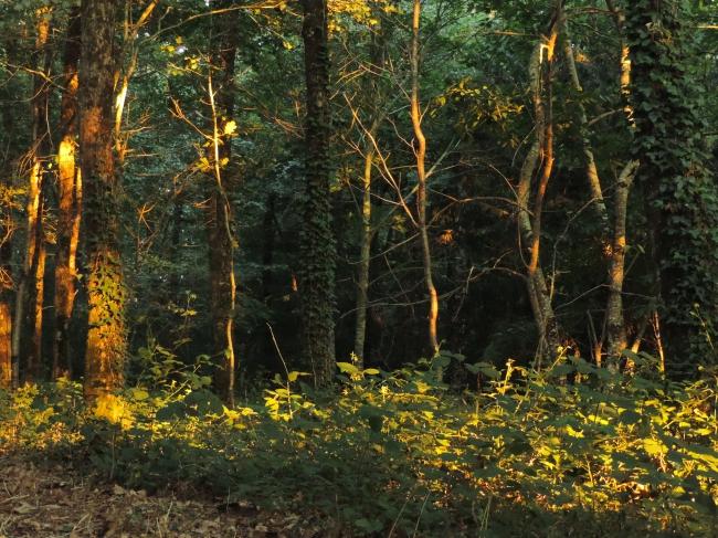 jacques benoist-méchin,temple de baalbek,cantique des cantiques,arbres,lumière,photosynthèse