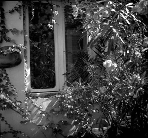 fenêtre Echalier.jpg