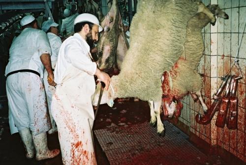 abattoirs,condition animale,transports animaux,végétarisme,protection animale,droits des animaux,jean-luc daub,ces bêtes qu'on abat,maltraitance,législation animale