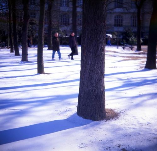 arbres dans la neige.jpg