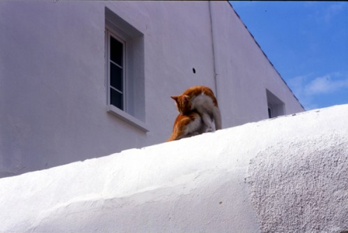 P2.21 chat roux.jpg
