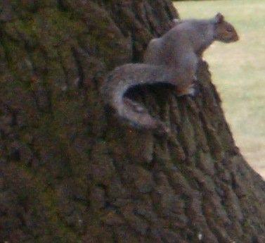 écureuil par Aline.jpg