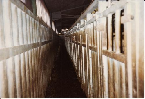 60. Couloir de la mort pour bovins dans un abattoir, Jean-Luc Daub