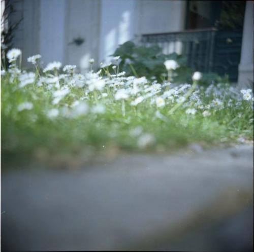 2010.La pelousedu13.564.jpg